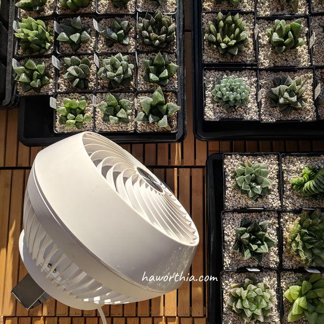 把电扇置于摇摆模式,避免植料干燥太快。
