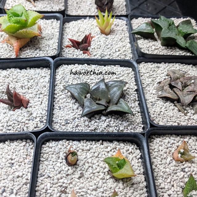 植物们被放在补光灯下以保持凉爽的温度。