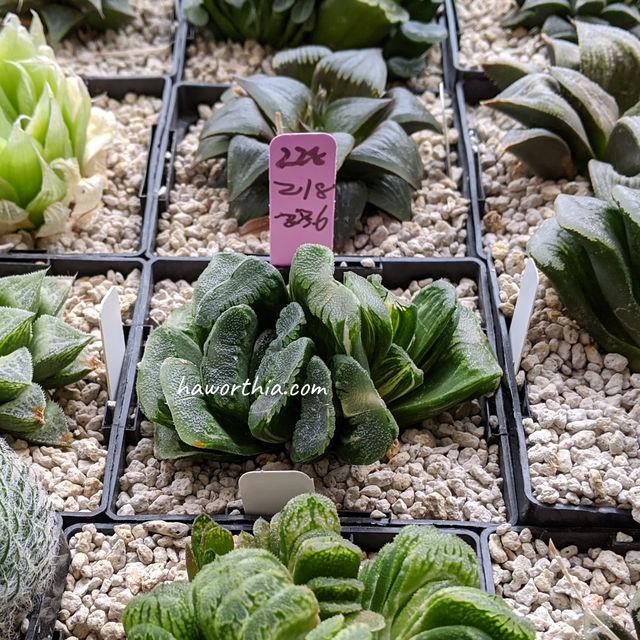 容器的重量可以被用来估计植料的湿度。